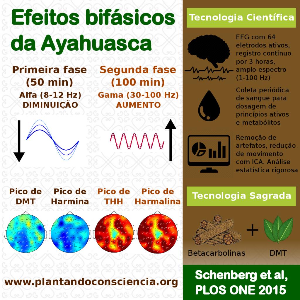 novo infografico pt_br FB